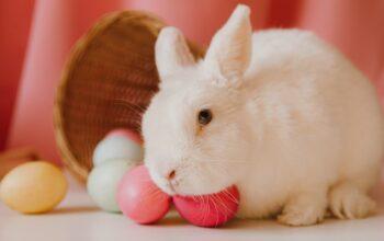 Zdjęcie poglądowe przedstawiające królik i świąteczne pisanki