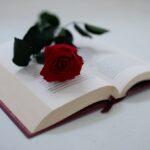 Zdjęcie przestawiające czerwoną różę leżącą na otwartej książce